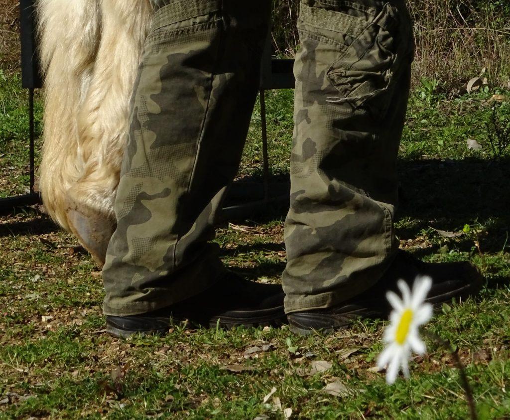 bitte beachte, für Aktivitäten mit den Pferden,-feste Schuhe