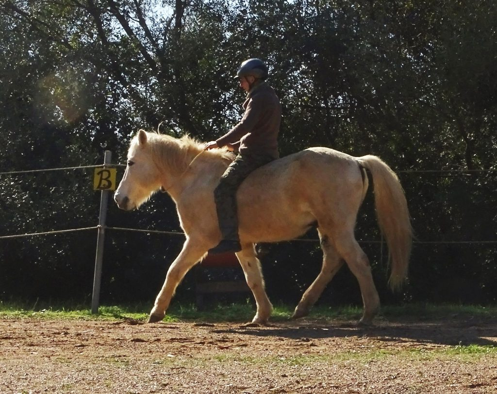 about myself and my horse-experience