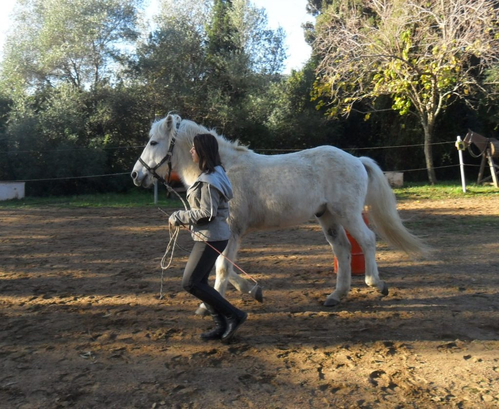 Horse activities and lessons in Peripetia