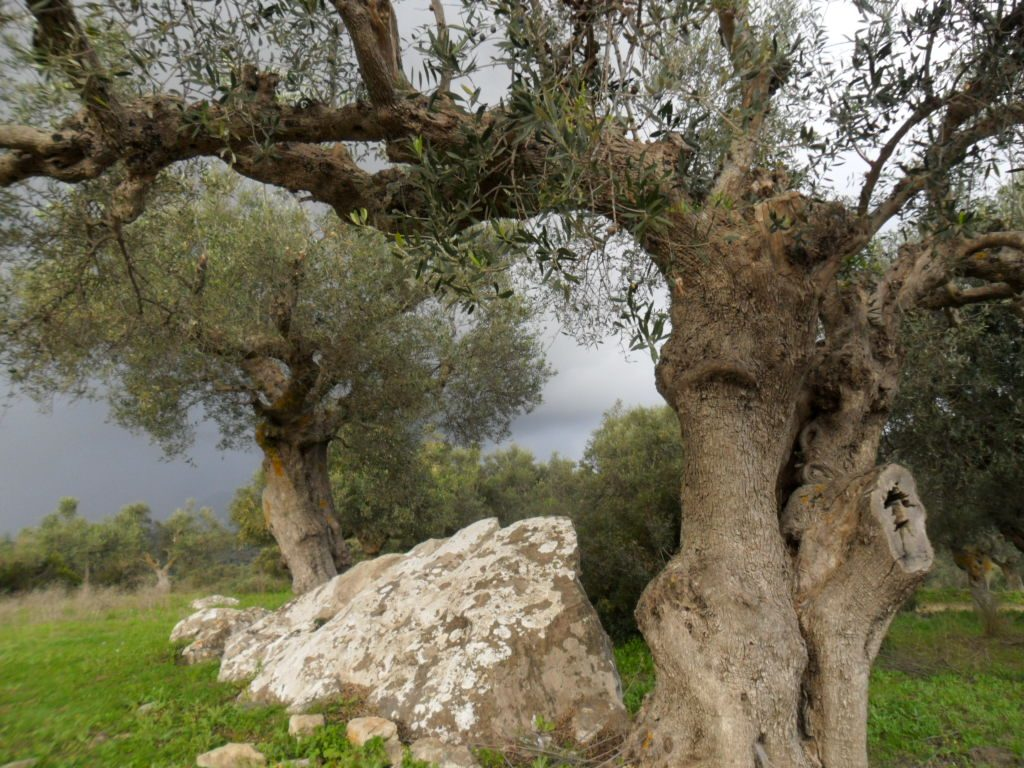 explore around, olive groves